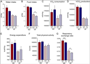 Comparison of energy balance of JIPWT and JIPTA mice using metabolic cages. (A to G) Groups of 6 mice were examined during a 3-day period to measure the mean food and water consumption, gas exchange (VO2 and VCO2), respiratory exchange quotient [VCO2]/[VO2], energy expenditure, and physical activity. Statistically significant differences between JIPWT and JIPTA mice are indicated (*, P < 0.05; **, P < 0.01).