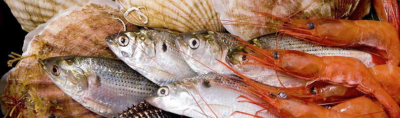 supermarket_seafood_michel_gunther_517032